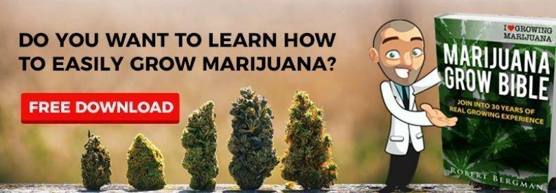 Hemp - Cannabis shop