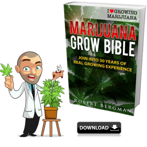 The Marijuana Grow Bible - Robert Bergman