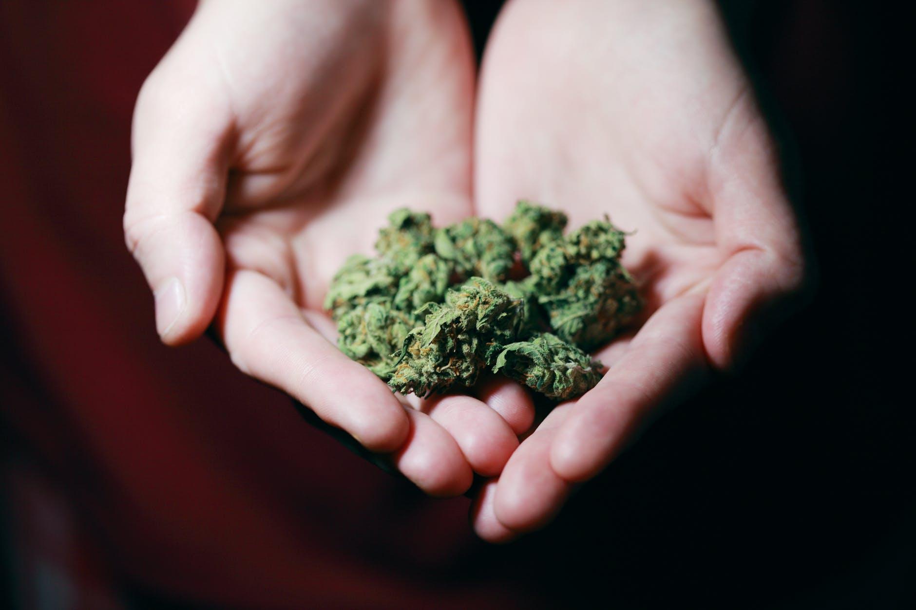 Medical cannabis - Cannabis industry