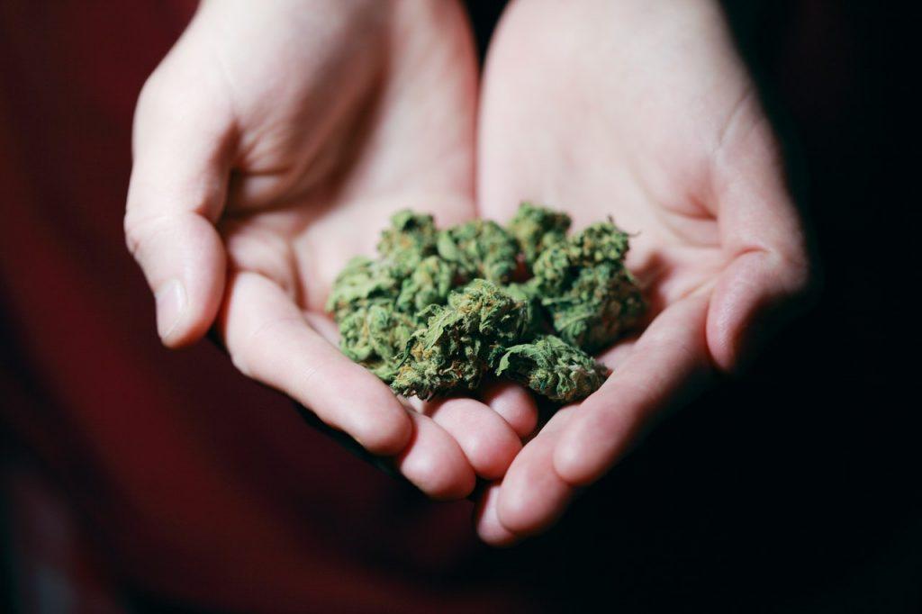 Hands Holding Marijuana Bud