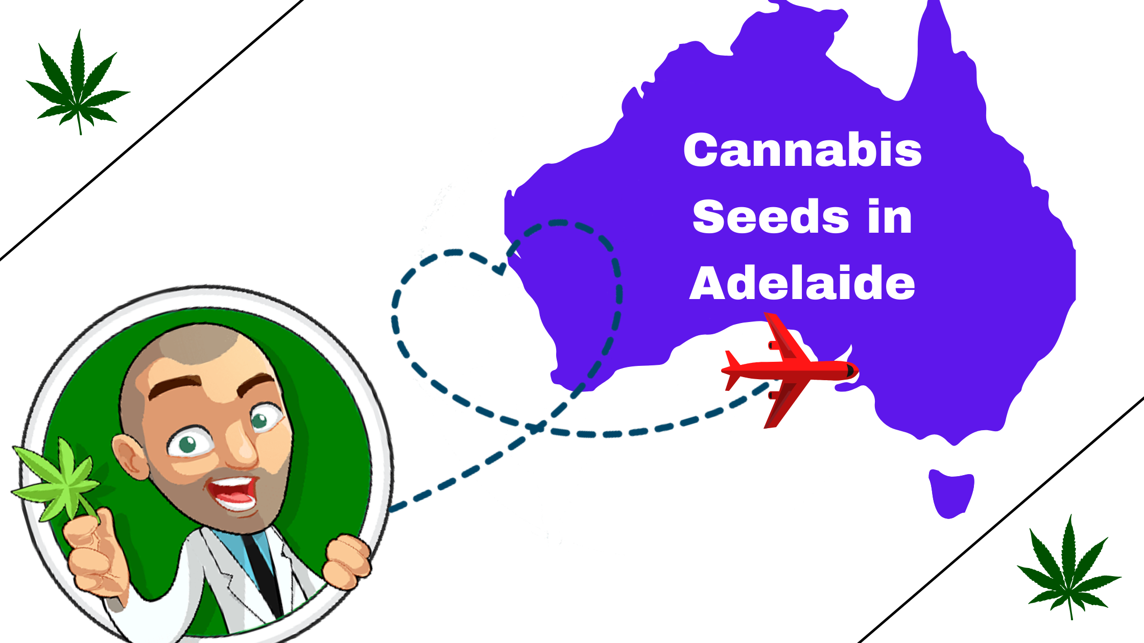 Cannabis-Seeds-in-Adelaide